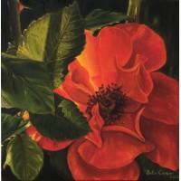J.C/ Wild Rose